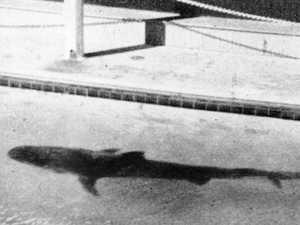 Shark regurgitates severed arm sparking murder mystery