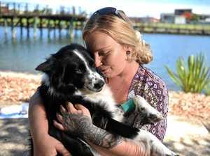 'Careless' behaviour leads to dog's near miss