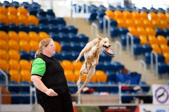 GREAT TEAM: Samantha Dobson and her dog Ash competing in canine disc.