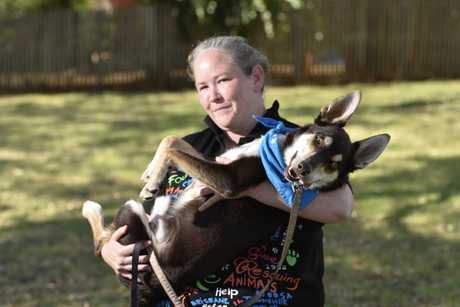 RSPCA assistant manager Erin Mcnamara with Albie the kelpie, who loves cuddles and needs a new home, Wednesday, January 2, 2019.