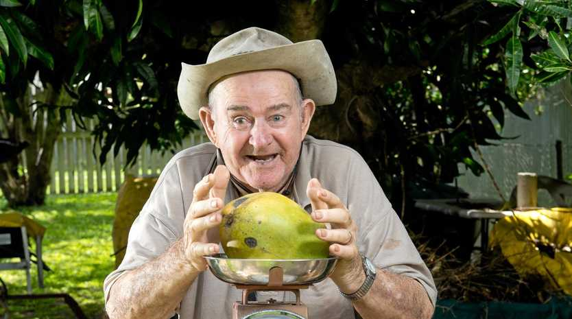MONSTER MANGO: Bill Willis, 82, from Walkerston with a massive 1.5 kilogram mango that dropped from a mango tree in his backyard on Tuesday.