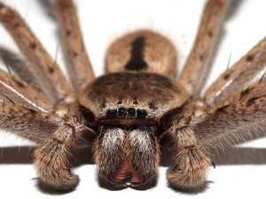 Spider sparks huge police response