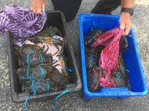 Crab crackdown on illegal fishers