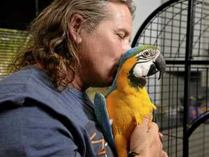 Patrick the parrot back home after 'macaw-ful' ordeal