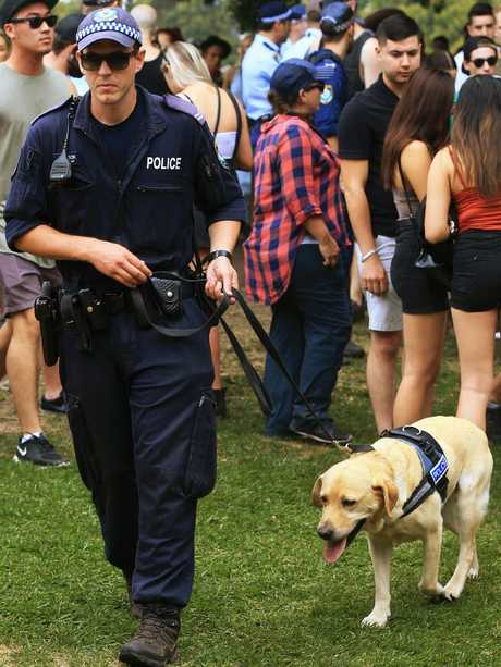 Despite the presence of police and sniffer dogs at festivals, drugs often find their way in. Picture: Toby Zerna