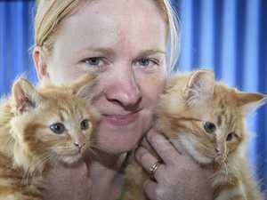 RSPCA programs will teach children the basics of animal care