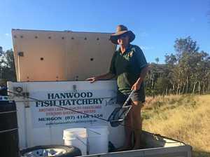 Community effort to breed endangered cod