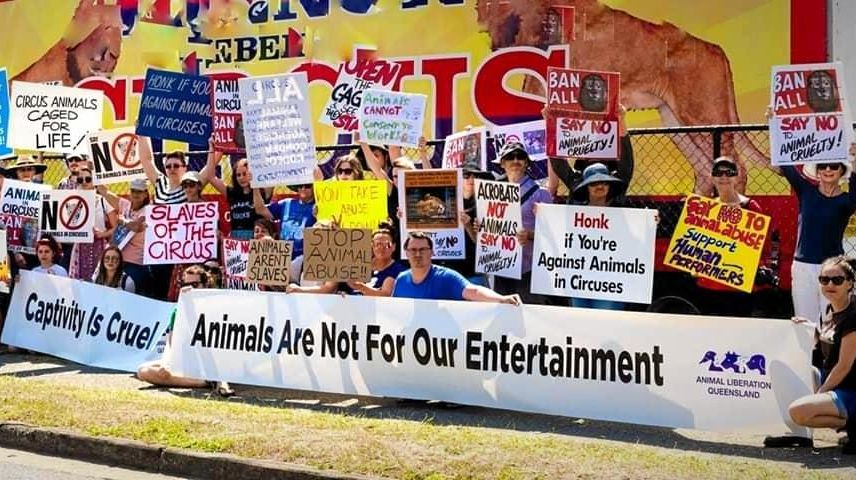 Dozens will gather on Saturday for a protest against the Burton's Circus at Sunshine Coast Stadium.