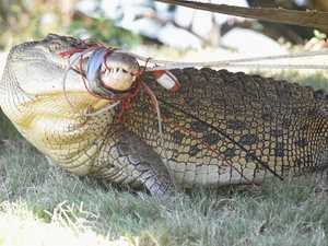Coast croc reports 'not confirmed', State Govt says