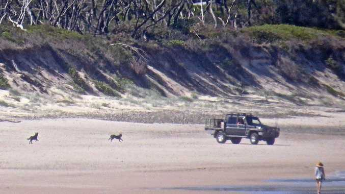 ON THE BEACH: A four-wheel drive vehicle on Brooms Head beach after Clarence Valley Council installed a gate to restrict access.