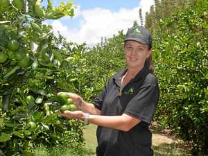 Limes prove fruitful for Bundaberg farmer