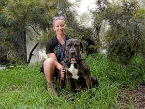 'Gentle giant' seeks loving home