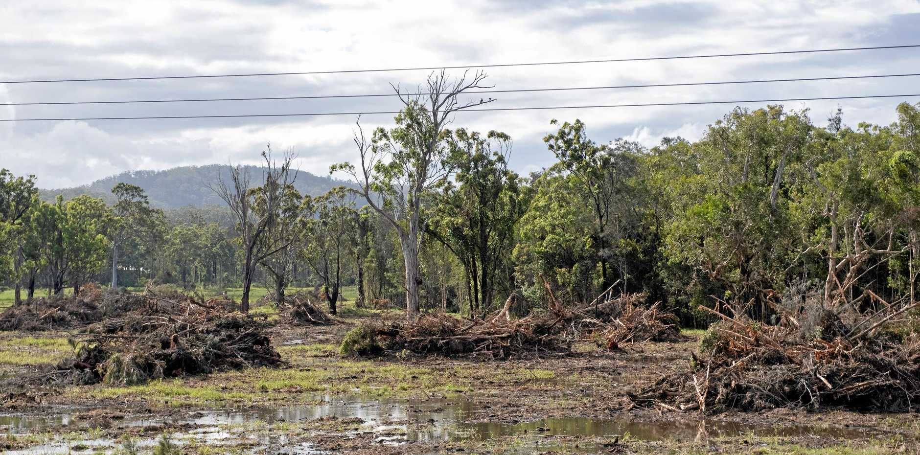 AgForce is demanding more transparency from the Queensland Government concerning land-clearing and vegetation management laws.
