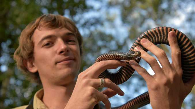 Snake Catcher Noosa aka Luke Huntley who warned families to be careful now now it's snake hatching season.