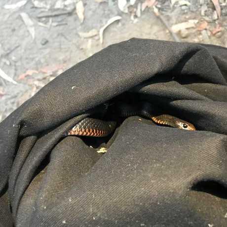 Snake Catcher Noosa aka Luke Huntley who warned families to be careful now now it's snake hatching season.
