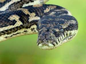 Mary Valley boy struck twice by snake