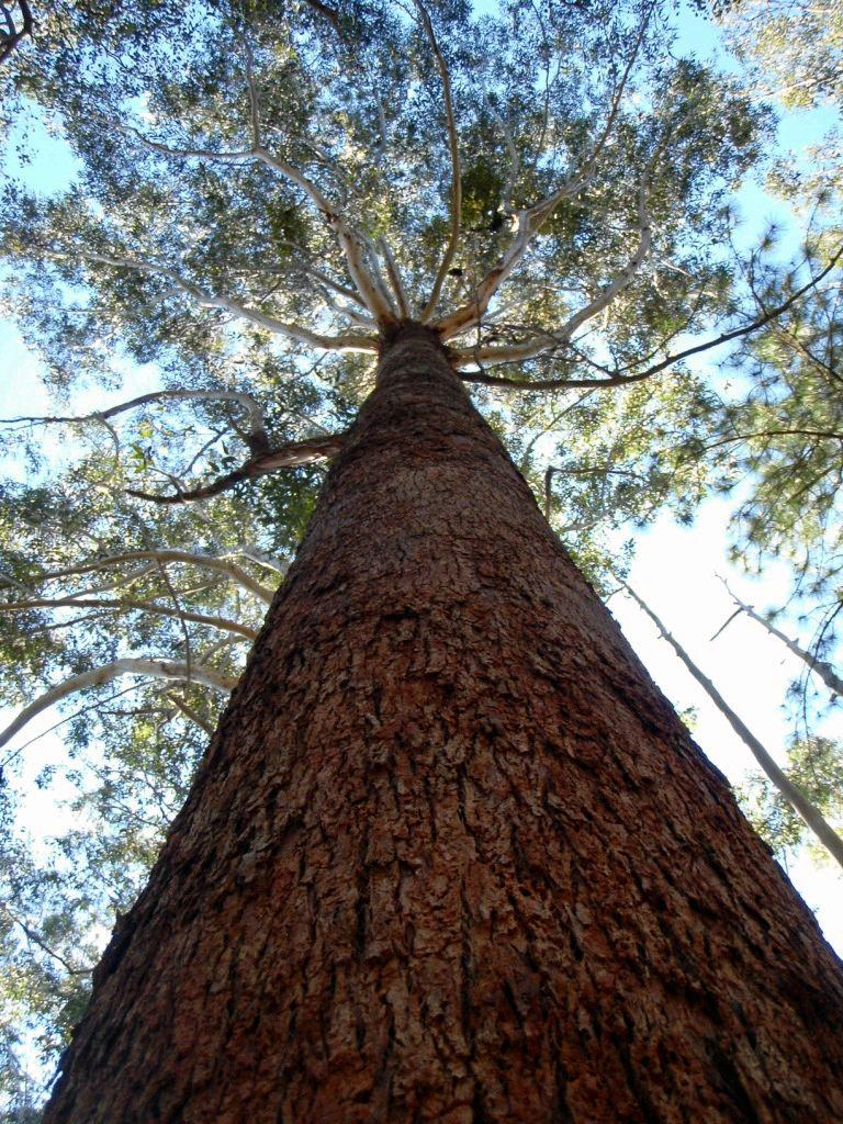 Timber industry leaders fear the Gympie economy could take a major hit if no movement is made in shoring up the private forestry industry.