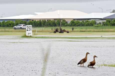 Ducks enjoy the excess water at Mackay Golf Club.