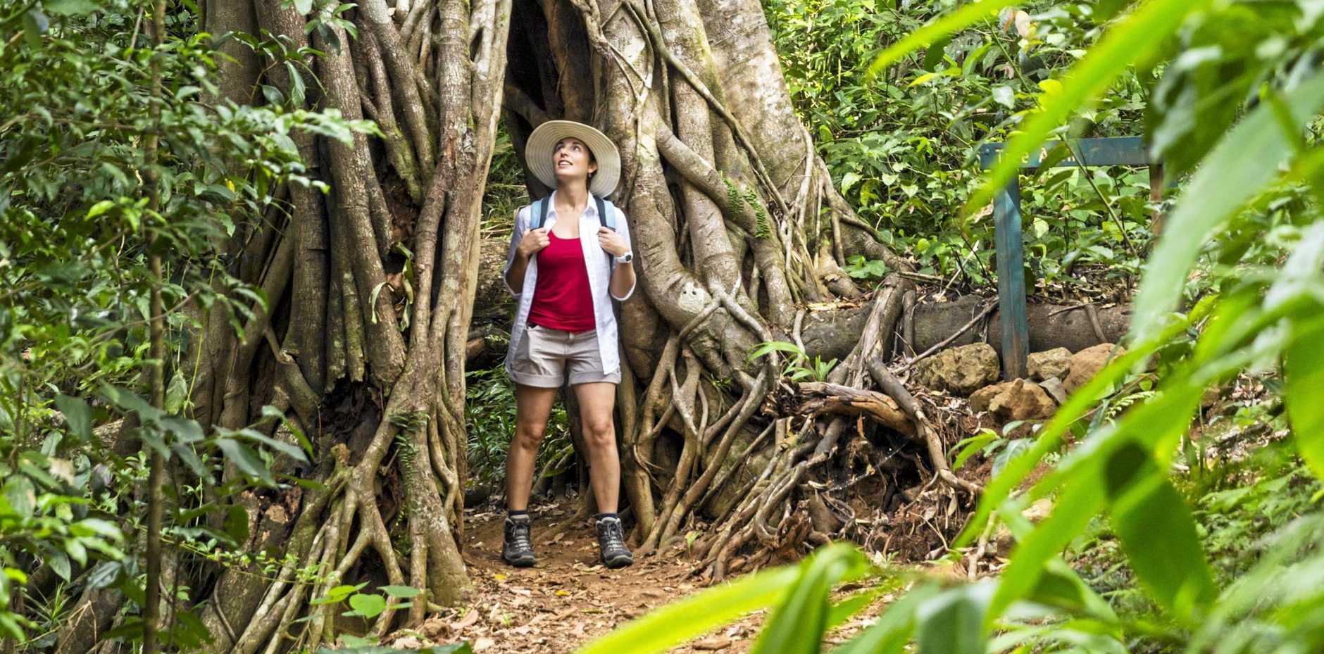 Hiker under the Strangler Fig Arch in Eungella National Park, Mackay, Queensland, Austral