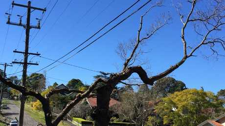 Trees being bizarrely being pruned in Sydney by Ausgrid to make way for power cables.
