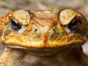 Pauline's radical plan to blitz cane toads