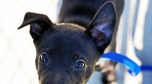 SAFE: If your dog or cat is microchipped and registered, Council can easily return your pet.