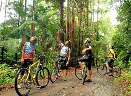 Bike tourism is now approved in Bongil Bongil National Park.