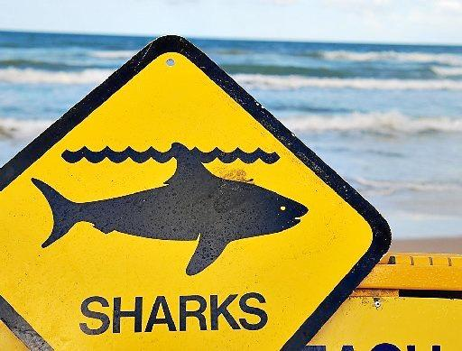 Shark attack in the Whitsundays