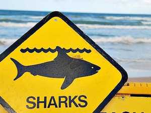QAS: Shark attack injuries serious but not fatal