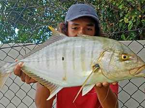 Why Tin Can Bay has anglers reaping rewards