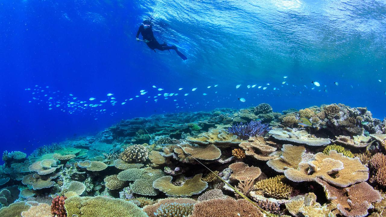 A researcher surveys coral on the Great Barrier Reef. Picture: AFP/James Cook University/Tane Sinclair-Taylor