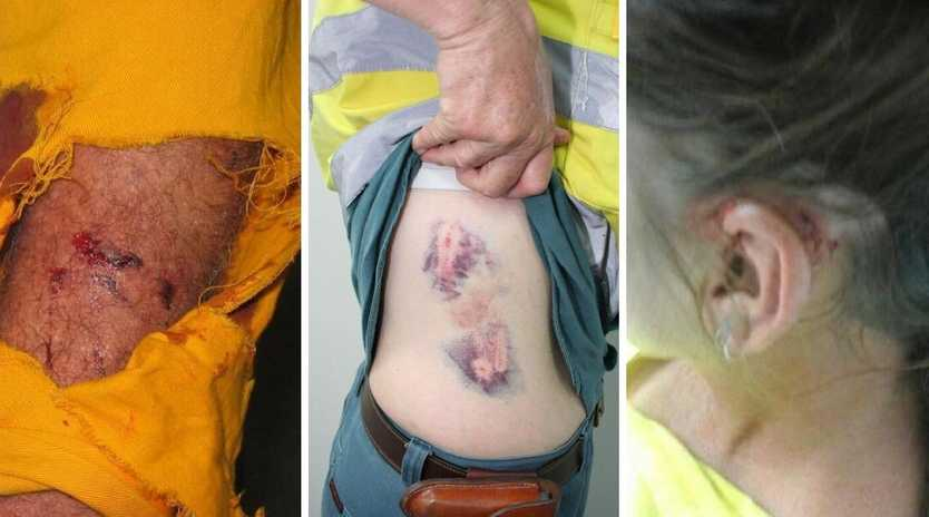 Ergon and Energex workers have been attacked by unrestrained dogs in Queensland yards, prompting new safety guidelines.
