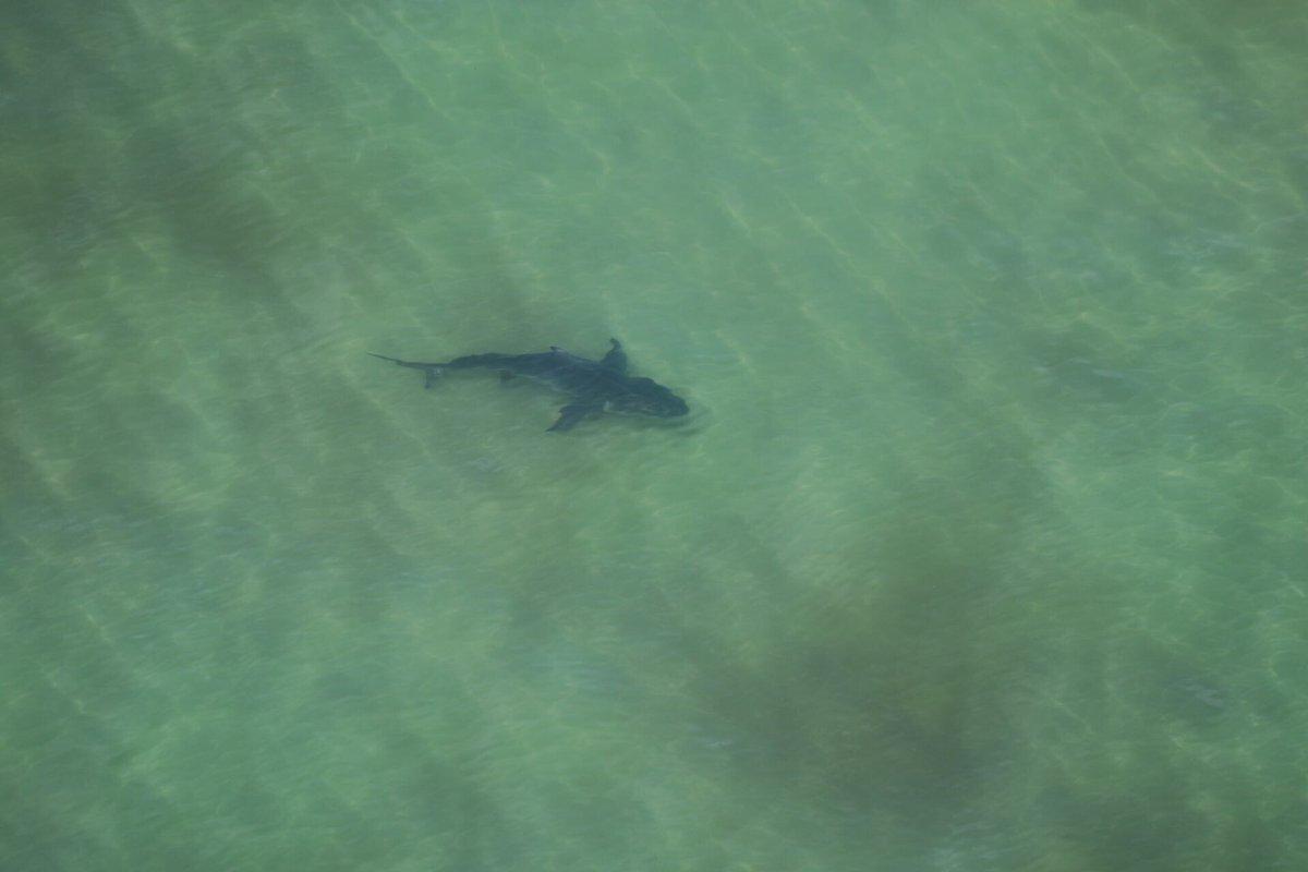 A shark has been sighted off Woolgoolga today.