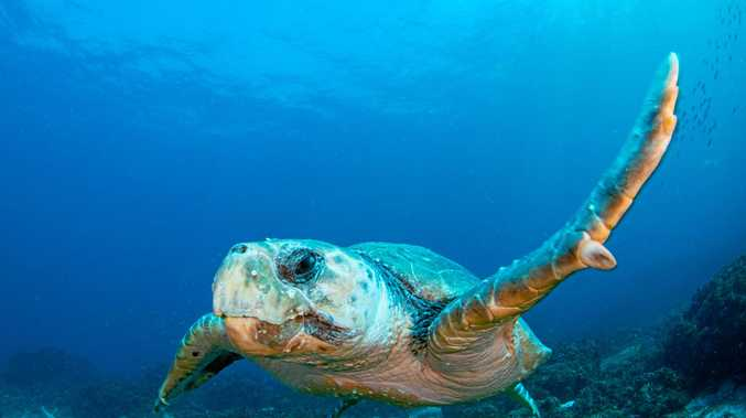 "TALKING TURTLES: ""Marine life is suffering"""