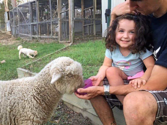 HORRIFYING: Three-year-old Enna-Beth Schiffke and her pet sheep Shane, whose body was found decapitated in his pen at South Bingera last Saturday morning.