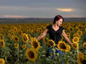 Sunflower crops in full bloom: Make for amazing photos
