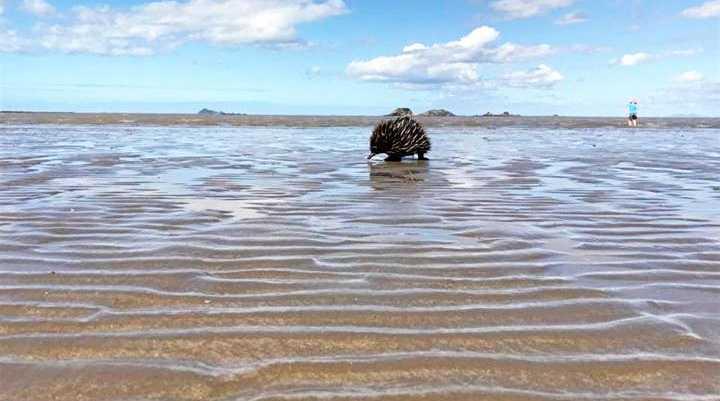 Echnida on the beach