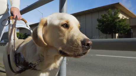 A very good doggo indeed.