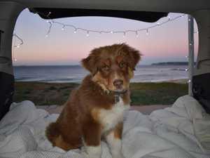 LOST DOG: 'Bring Koda home'