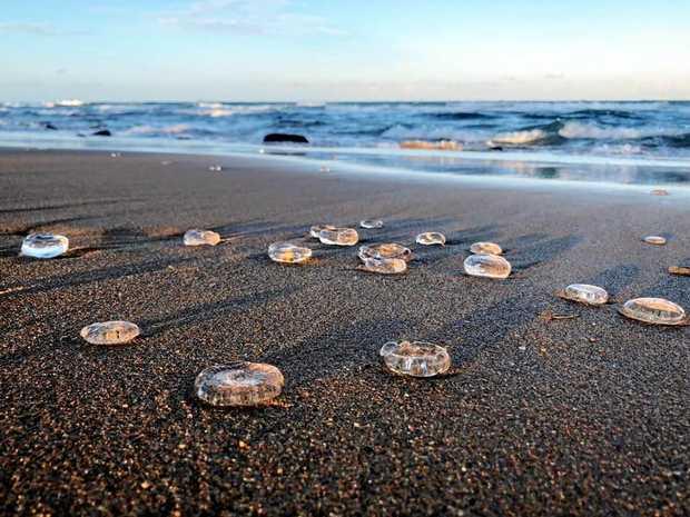 Beautiful, jelly-like donuts line the shores at Bargara.