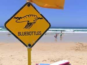 Blue bottles claim more victims despite warnings