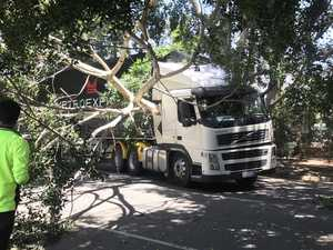 Miracle escape for truck driver after tree falls