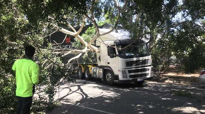A tree has fallen on a truck on Racecourse Dr at Bundall on 13/01/19. Photo: Emily Halloran