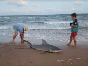 Video of shark being caught on beach raises stink