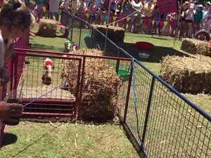 Photo finish at Iluka Pig Races