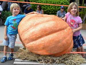 The secret to growing a 374kg pumkin