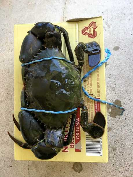 Look at the size of that mud crab Andrew Box caught.
