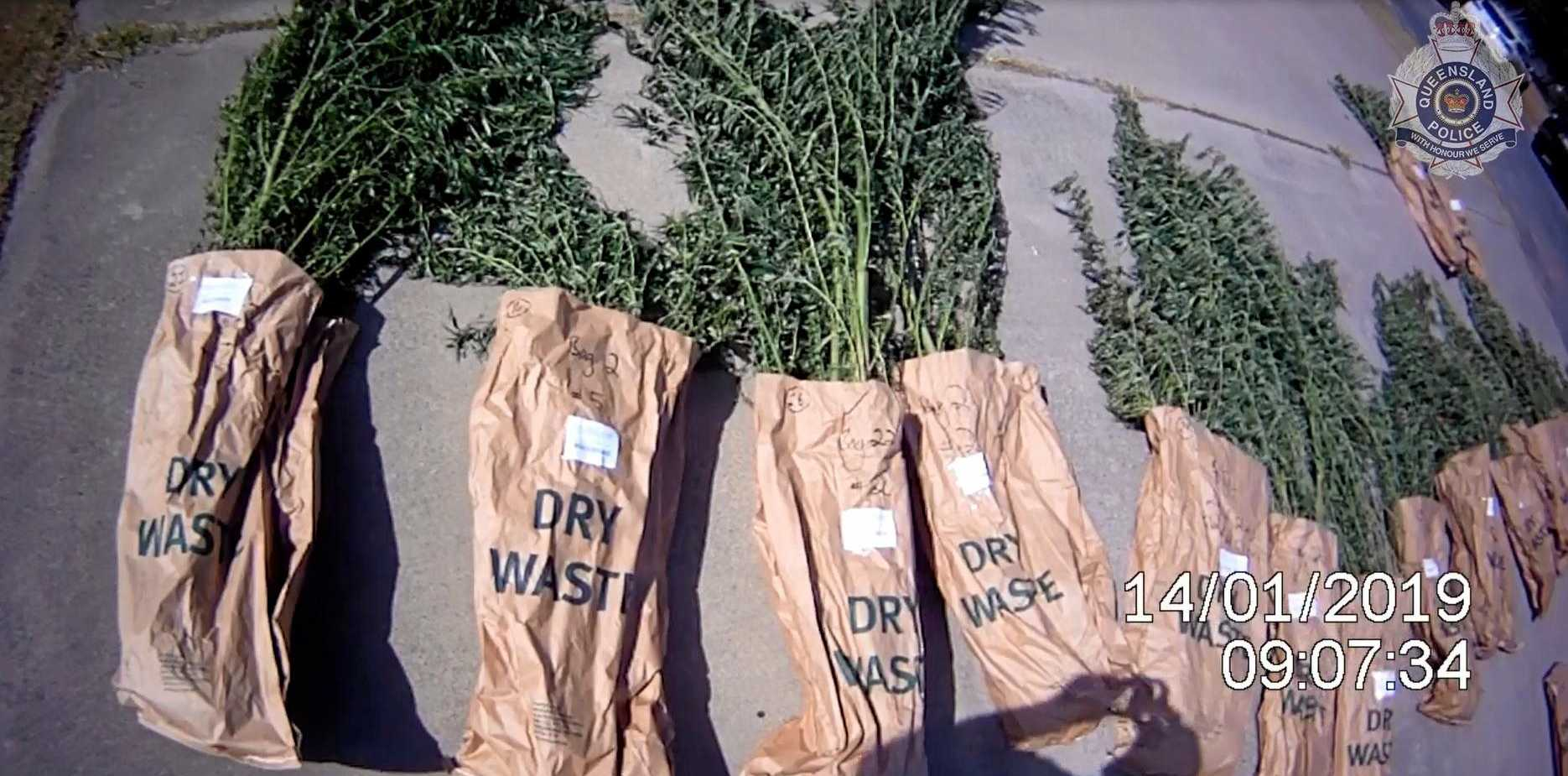 Police found 182 cannabis plants in the backyard of a Coolum Beach and three kilograms of dried cannabis.