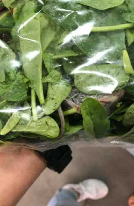 Supafresh says it has numerous rodent traps and check at its farm and factory to try and prevent rats from being served with the spinach.