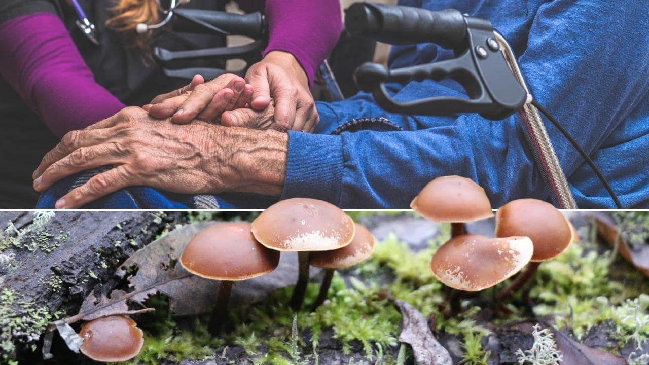 "Dying patients will be treated with synthetic ""magic mushrooms"" in a Melbourne medical trial that aims to ease the paralysing anxiety felt by many who are in palliative care."